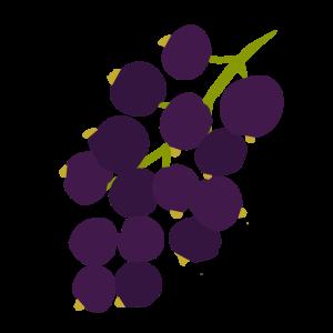 Chytre ovoce - ovoce - rybiz